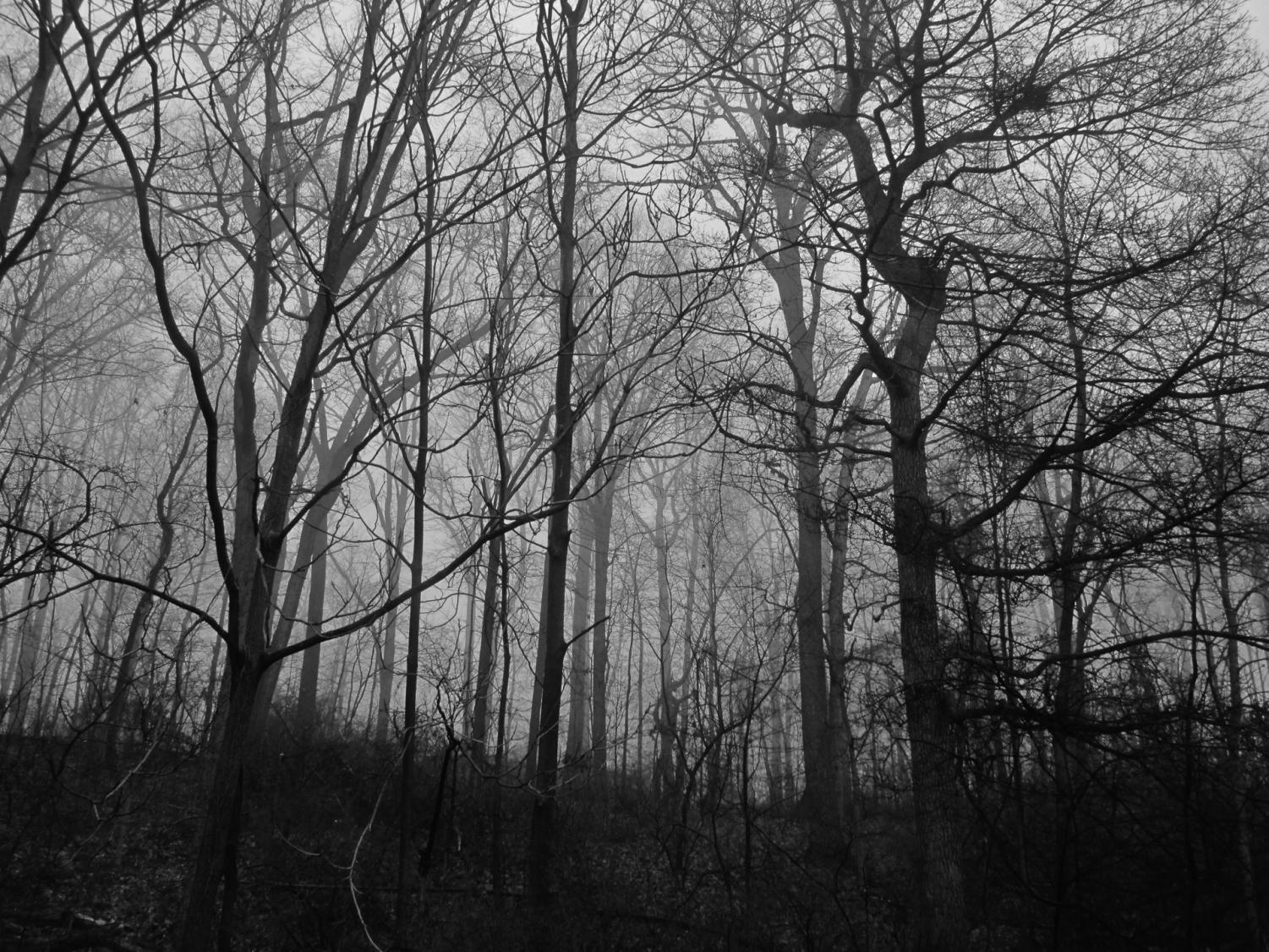 Public Domain Pictures - Scary Woods