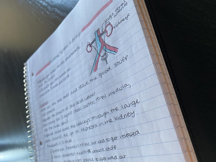Biology+notes